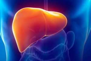 Liver Health and Weight Loss